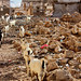 Berbera, Somaliland.