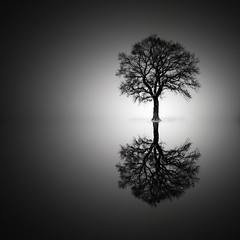 Tree in the mirror (lja_photo) Tags: tree reflection reflections fineart fujixt20 silhouette silence silent dramatic design monochrome monotone monoart moody mist mood minimalistic minimal minimalism black white blackandwhite bw bnw blackandwhitephoto nature natural light photography abstract abandoned contrast shadows beautyful landscape landscapes luxembourg photoshop art textures haze outdoors