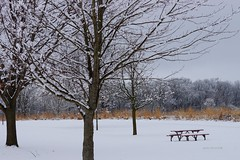 Saint Patrick's Day Snow (Anton Shomali - Thank you for over 2 million views) Tags: saintpatricksday saint patricks day snow trees march winter cold tree grass landscape white bench sunday perryfarm bradley illinois us usa america