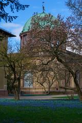 Blaustern und Magnolien (KaAuenwasser) Tags: blaustern magnolien baum bäume pflanzen blütenmeer gebäude orangerie botanischergarten karlsruhe wege weg bestand anlage park garten grün blau