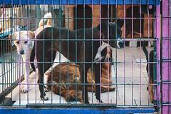 Yedikule animal shelter, Istanbul (sdhaddow) Tags: istanbul turkey animals dog shelter rescue