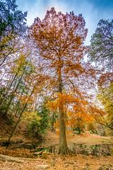 AUTUMN Rome, GA (grantdaws) Tags: autumn fall colors trees bright wide angle usa georgia berry college pretty colorful saturated leaf leaves