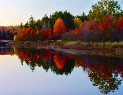 Mirror reflection of foliage (susanbellphotography) Tags: maine fall foliage reflection water