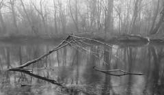 Foggy Morning @ The River (madbesl) Tags: fog foggy nebel neblig natur nature flus river amper bayern bavaria deutschland germany schwarzweis bw monochrom olympus omd em10 m10 omdem10 spiegelung reflection
