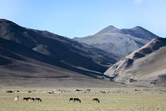 Tsokar#2 (jean matthieu) Tags: blue canon clood cloods color eos himalaya india indiantibet ladakh lake landscape light montain montains sky tsokar