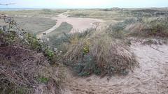 Dunes d'Oye-Plage