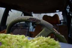 """La Renault 14 TL de 1976. (""""La vadrouille dominicale"""") Tags: renault 14 tl ts 1976 épave old casse du peintre urbex urbexfrance rurex rural rurbex region rhone alpes abandon abandoned abandoné abandonné ambiance exploration explo environs lyon accidenté vieille bagnole"""