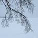 Winter Silhouette - Silhouette d'hiver