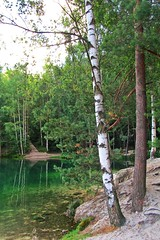 birch trees by the water :) (green_lover (I wait for your COMMENTS!)) Tags: trees birch lake pískovna czechrepublic water reflections green nature