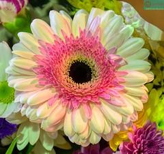 Hermosa Flor. (Pontius Pilatuss) Tags: flor flores flower flowers colors colores nature naturaleza hermosa nice bella linda andalucia andalusie