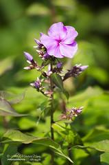 Flowers by Alberto Marquez Marin 🇻🇪 (Alberto Márquez Marín) Tags: 2019naturevenezuelacopyrightedalmavzla