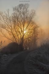 January sun (fabrizio daminelli ) Tags: alba sunrise italy fabriziodaminelli canon lombardy lombardia wildlife natura nature landscape paesaggio sole sun fog nebbia river fiume adda