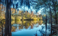 Bayou for you (jodycoker1) Tags: bayou bodcau water cypress trees reflection hdr affinity louisiana