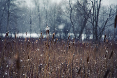 Swamp Stand (Matt Champlin) Tags: winter cold frozen snow snowing snowy snowstorm hunt hunting deer woods hike walk walking life contemplation pure peaceful tranquil quiet calm canon 2018 home beautiful flx