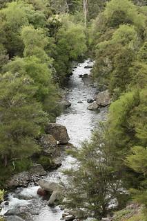New Zealand Free Range Hunting - Marlborough 26