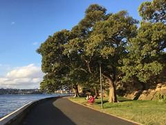 IMG_2314 (dudegeoff) Tags: 20190213sydeveningbikeride february 2019 sydney nsw australia bikerides sydneyharbour domainyurongprecinct parks