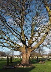 Anfield Cemetery (.annajane) Tags: liverpool merseyside anfield cemetery graveyard liverpoolcemetery uk england tree winter gravestone branches