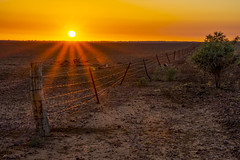 Morven 018 (Higgo15) Tags: outback sunrise fence sunstars drought