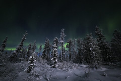 Winter wonderland (photographybyjoss ↟↟) Tags: auroraborealis aurora auroras ladyaurora backtonature canoneos5dmarkiii dark dreamscapes europe explorenature gooutexplore green intotheforest josefinekarlsson landscape landschaft mood moody nature nordic night nightshoot peaceful perfectlight sweden scandinavia snow swedishforest trees norrsken norrbotten northernlights jukkasjärvi lapland swedishlapland