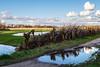 Behind IKEA (glukorizon) Tags: 52weeksof2019 biesland boom cloud delft gras grass knottedwillow knotwilg lake landscapephotography meer nederland plant plas pond puddle reflectie reflection regenplas spiegeling sunny tree wolk zonnig zuidholland