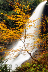 Sweet Cherry (snapdragginphoto) Tags: cherrytree dryfalls cherry autumn fall color waterfall highway64 northcarolina highlands