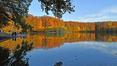 Herbst von seiner schönsten Seite  -  Autumn at its best (karinrogmann) Tags: herbst autumn autunno köln cologne colonia stadtwald cityforest forestacittadina