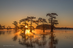 Morning Misty (FollowingNature (Yao Liu)) Tags: bayou fallfoliage fallcolors swampcypress baldcypress swamp lake water sunrise followingnature visittexas texas caddolake