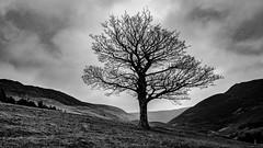 Winter is coming (chromaphoto uk) Tags: got winter autumn mono monochrome landscape peakdistrict greatermanchester oldham dovestone