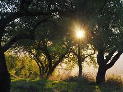 Spain Andalusia Sierra Nevada Alpujarras © Spanien Andalusien © Spain Andalusia © Andalucía La Alpujarra Granadina © (hn.) Tags: yegen alpujarradelasierra spain europe andalusia andalucia spanien eu europa andalusien heiconeumeyer copyright copyrighted tp2018anda es sierranevada laalpujarra alpujarras provinciadegranada alpujarragranadina españa baum tree pflanze plant nature natur mandelbaum prunus prunusdulcis almond almondtree almendro árbol gegenlicht backlight agriculture rural ländlich contraluz starburst sunstar sonnenstern blendenstern blende aperture
