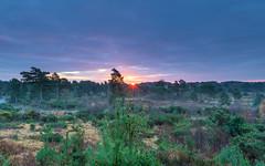 Lions Hill Sunrise (nicklucas2) Tags: landscape cloud heath tree branch leaves autumn sun sunburst sunrise