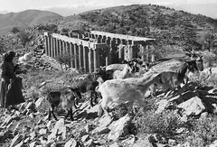 temple of hepicurious Apollon-god of sunlight- at bassae 1954 (A TEAR FOR YOU GREECE) Tags: apollo god greek temple antiquity greece grece vintage photo apollon απολλωνασ ναοσ τεμπλο