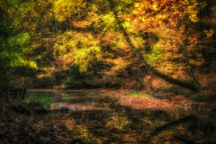 Autumnal pond in the Guttenberg forest (Claudia G. Kukulka) Tags: tree baum trees bäume fall autumn herbst foliage laub forest woods wald irtenbergerwald guttenbergerwald pond teich path way pfad weg painterly