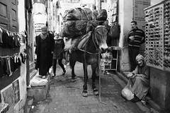Beast of Burden (Tom Levold (www.levold.de/photosphere)) Tags: fuji marokko xpro2 fez xf18mmf2 sw bw street mule maultier beastofburden bazaar markt market lastentier