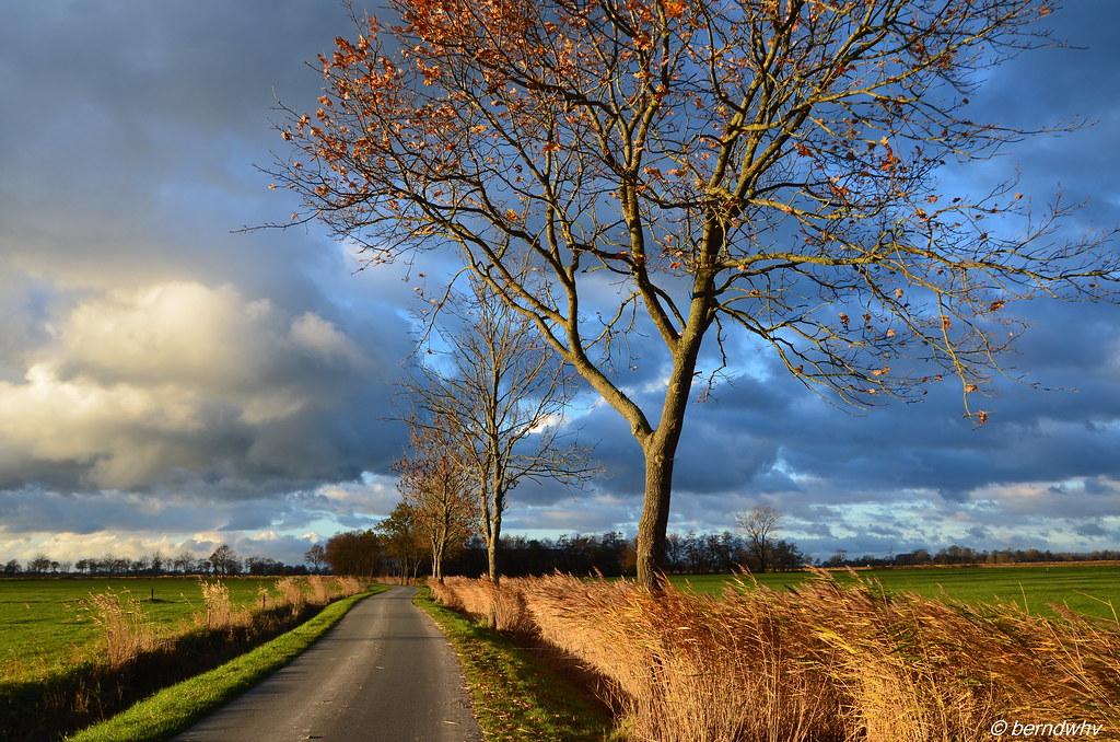 be659d9267651 Landstraße bei Hooksiel-Tünnens   Landkreis Friesland (berndwhv) Tags   deutschland norddeutschland niedersachsen