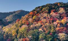 Fall Foliage (bacon.dumpling) Tags: arashiyama autumn fallfoliage fujifilmxpro2 fujinonxf50140mmf28rlmoiswr japan koyo kyoto leafchangingseason
