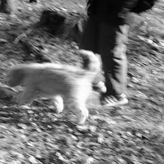 A Boy And His Dog (SopheNic (DavidSenaPhoto)) Tags: fujinon35mmf14 impressionisticphotograph monochrome intentionalcameramovement boy dog icm bw xt2 blackandwhite fujifilm impressionism