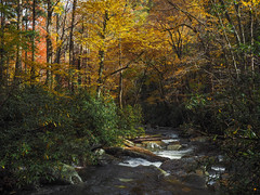 Porters Creek, Great Smoky Mountains National Park, Tennessee (netbros) Tags: greatsmokymountainsnationalpark tennessee porterscreek porterscreektrail fallcolor footlog greenbrier netbros internetbrothers