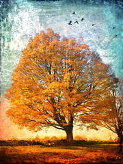 The golden days are flying away (jackaloha2) Tags: fall autumn birds fly leaves texture