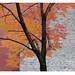 autumn tree on brick & stone