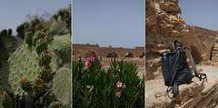 Botanic and stones (Insher) Tags: tunisia tunis cactus aqueduct