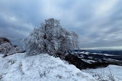 frost (gabriela vetsch) Tags: snow ice winter cold tree snowy peak white weiss berg schnee kalt baum eis frost vogelberg solothurn passwang switzerland schweiz jura blau klirrend mood blue frosty