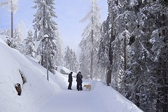 winter walk (majka44) Tags: slovakia people winter dog animal snow tree forest hightatras walk lamp frozen 2018 light day landscape