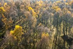 Autumn Sun - Bolehill Quarry (gavsidey) Tags: trees bolehill quarry autumn colour derbyshire ngc d500 low sun shadows