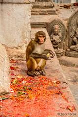 Kathmandu, Nepal (Ben Perek Photography) Tags: kathmandu nepal asia azja unesco buddhism hindu temple temples capital interesting architecture ancient kingdom