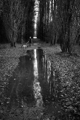 One autumn day (Roberto Spagnoli) Tags: autunno autumn autumnleaves reflection trees dog walking fujix100t biancoenero bw monocromo fall blackandwhite vertical animal nature