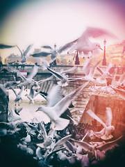 Crazy Birds (Calinore) Tags: france paris city ville birds oiseaux mouette gull mess désordre