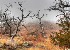 2019 - Vacation - Wichita Mountains Wildlife Refuge (zendt66) Tags: zendt66 zendt nikon d7200 wichitamountains wildlife refuge lawton oklahoma granite mountains fog