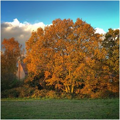 Blocking the view (Andy Stones) Tags: tree autumn autumnal colour colourful grass branches leaves house scunthorpe lincolnshire northlincolnshire northlincs nlincs sunlit sunlight weather weatherwatch nature naturephotography outdoors outside image imageof imagecapture photoof photography
