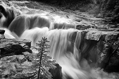 Untitled (RogelSM) Tags: canadianrockies icefieldsparkway jasper water waterfall river rocks bw landscape nature outdoor
