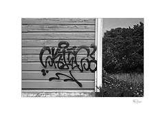 Art (radspix) Tags: yashica 230af af 3570mm f3345 macro ilford fp4 plus pmk pyro